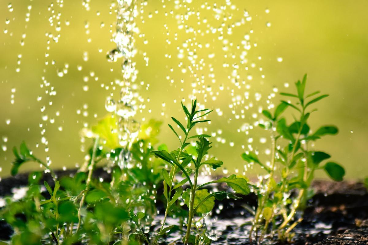 regenewasser